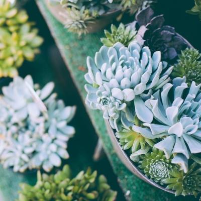 """@westendbia: """"Found some succulents on Denman Street… #WeAmaze"""""""