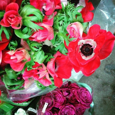 "@westendbia: ""Found these stunning red Anemones at the Windsor Market"