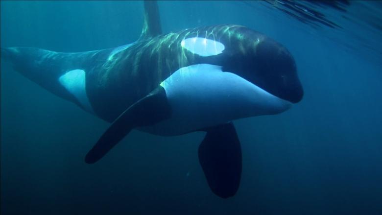 Say Hello to Luna the Lumière Whale! - West End Business Improvement  Association