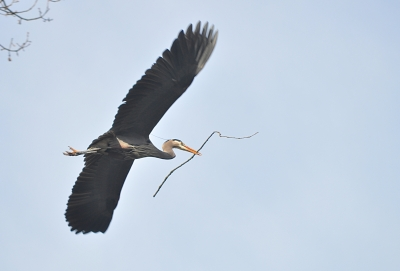West End Nature Show: Heron Edition